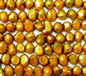 Aztec Gold Fresh Water Pearls 6-7mm